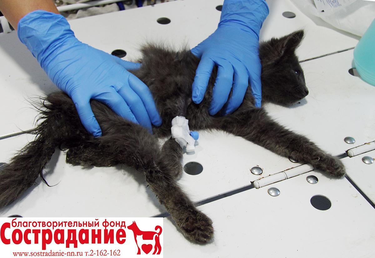 лечение интерита у котенка вида термобелья:
